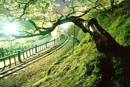 2020阿里山神木下婚禮系列活動 與您相約浪漫阿里山