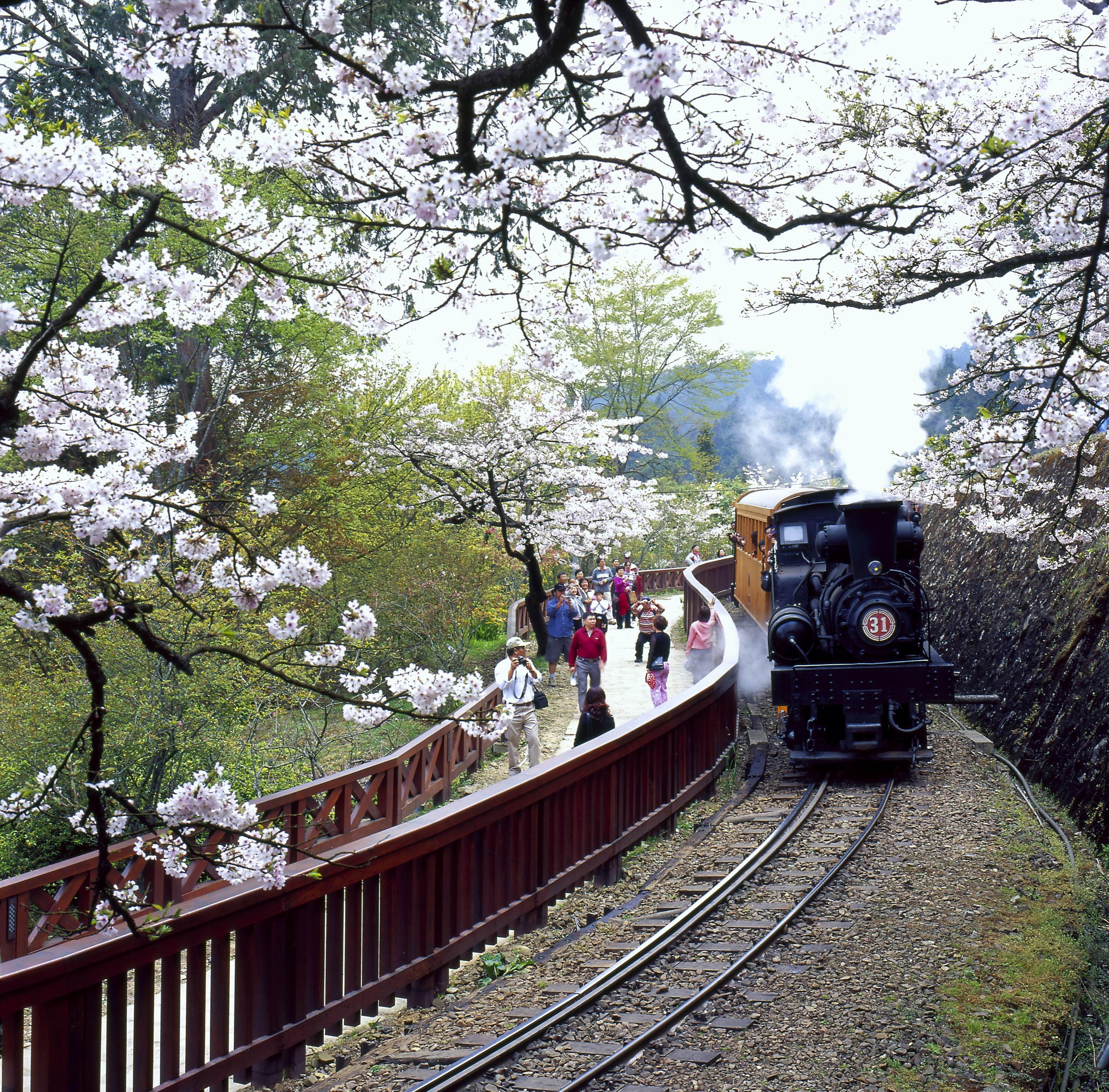 阿里山健行2日遊