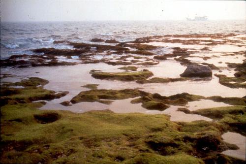 珊瑚礁島~小琉球一日遊