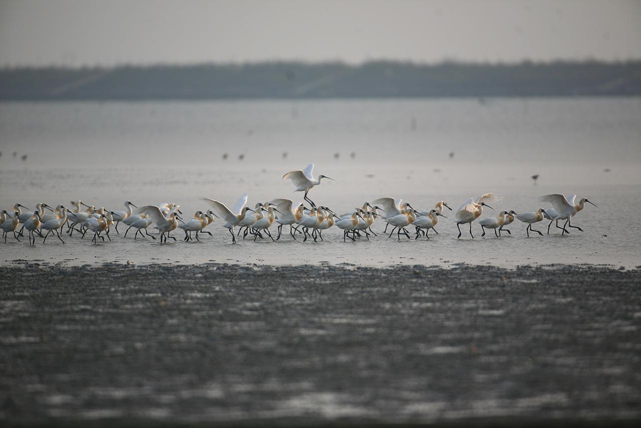 黑面琵鷺保護區風景