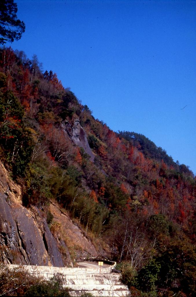 紅檜巨木林區