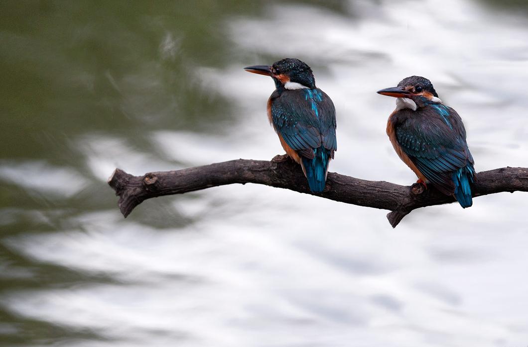 芝山文化生態綠園賞鳥
