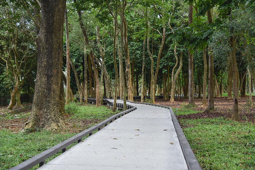 新威森林公園木棧步道