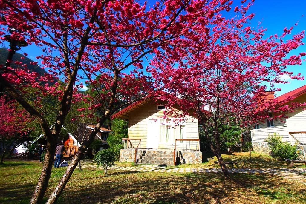 Spring in Huisun Forest Area