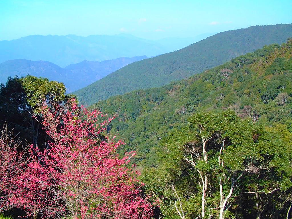 藤枝國家森林遊樂區(休園)