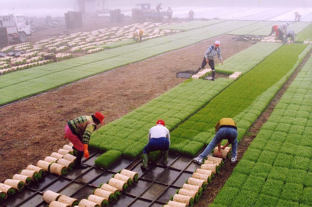 大坡池草皮