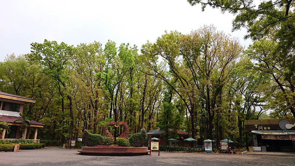 桃花心木落葉季(八大森林樂園提供)