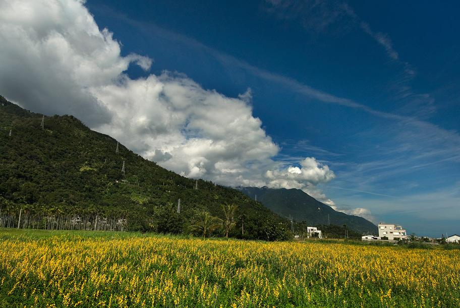 花東縱谷國家風景區--縱谷花田