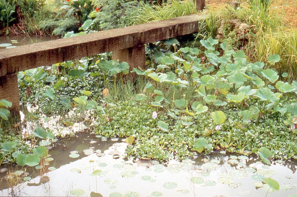 恆春生態農場生態池