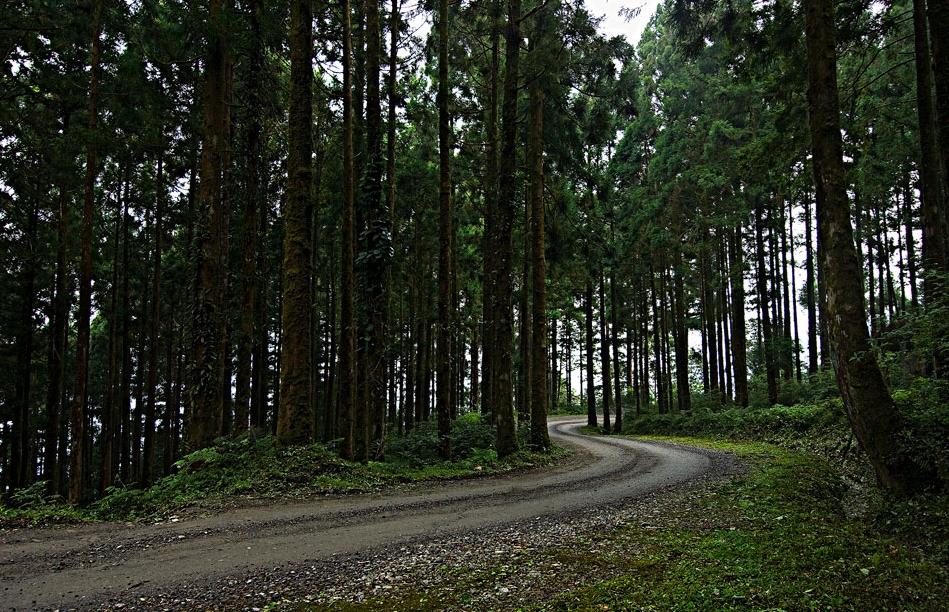 棲蘭神木區