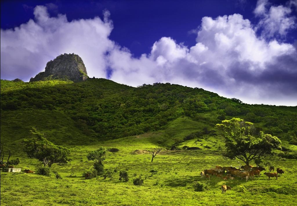 遠望標高 318公尺的大尖石山