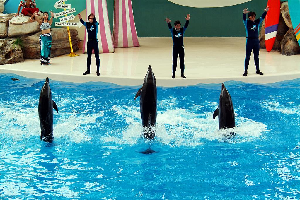 遠雄海洋公園海豚表演