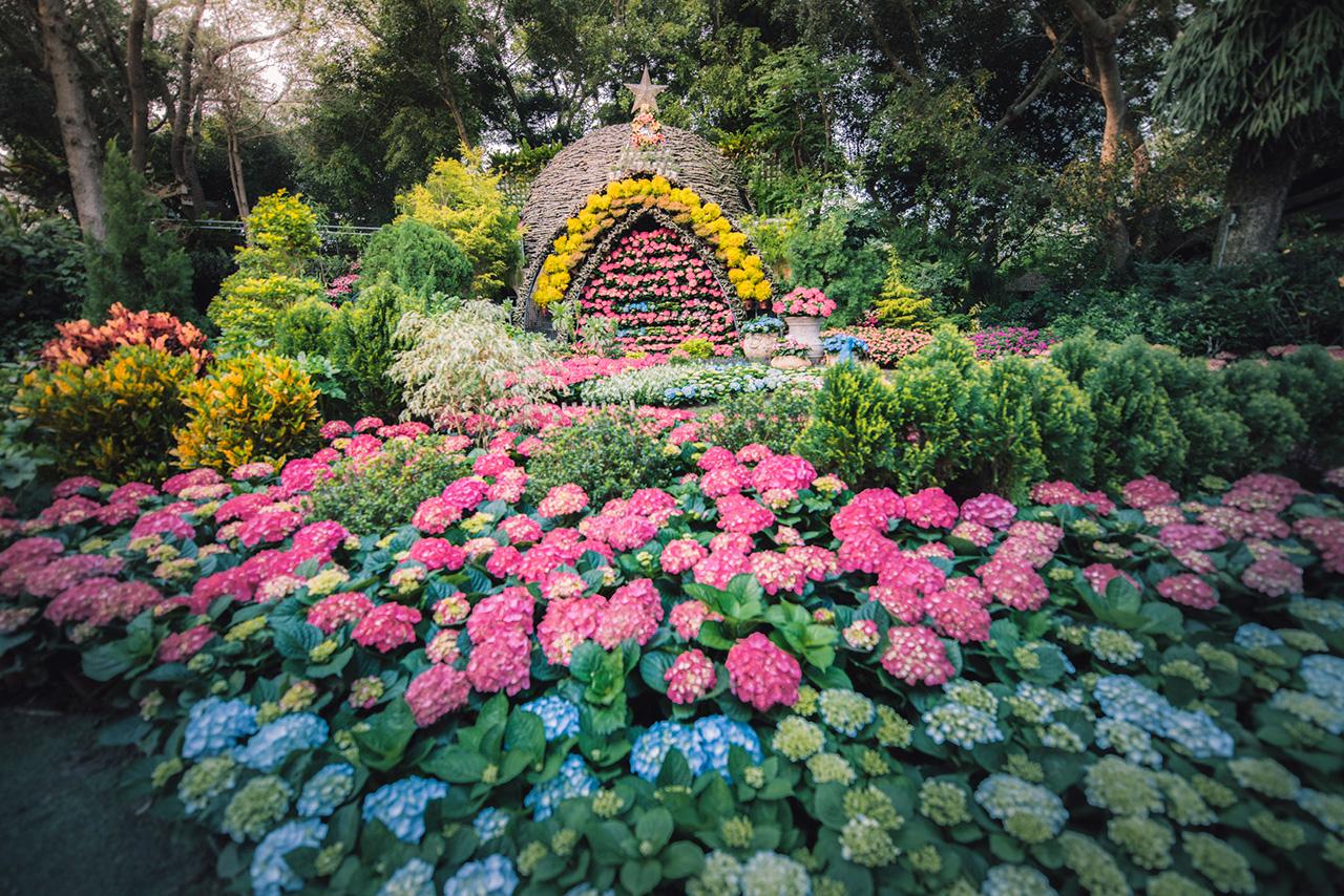 繡球花季為每年3月至六月,春暖花開季節,吸引海內外遊客前來賞花/花露農場提供