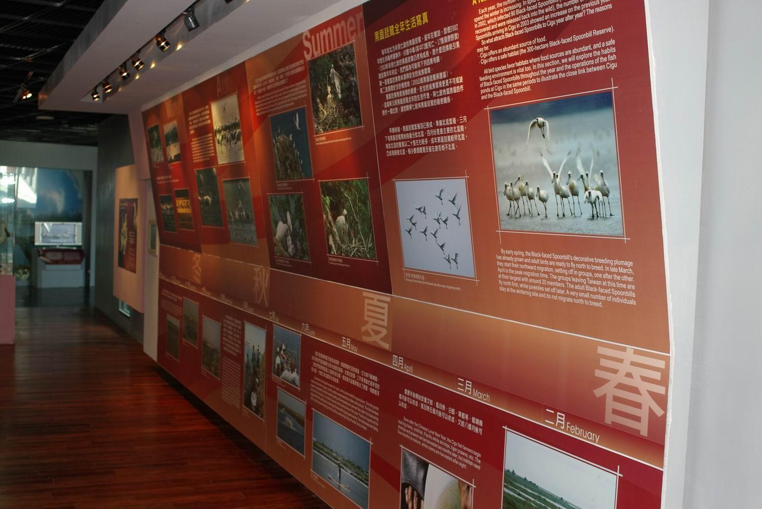 黑面琵鷺生態展示館內