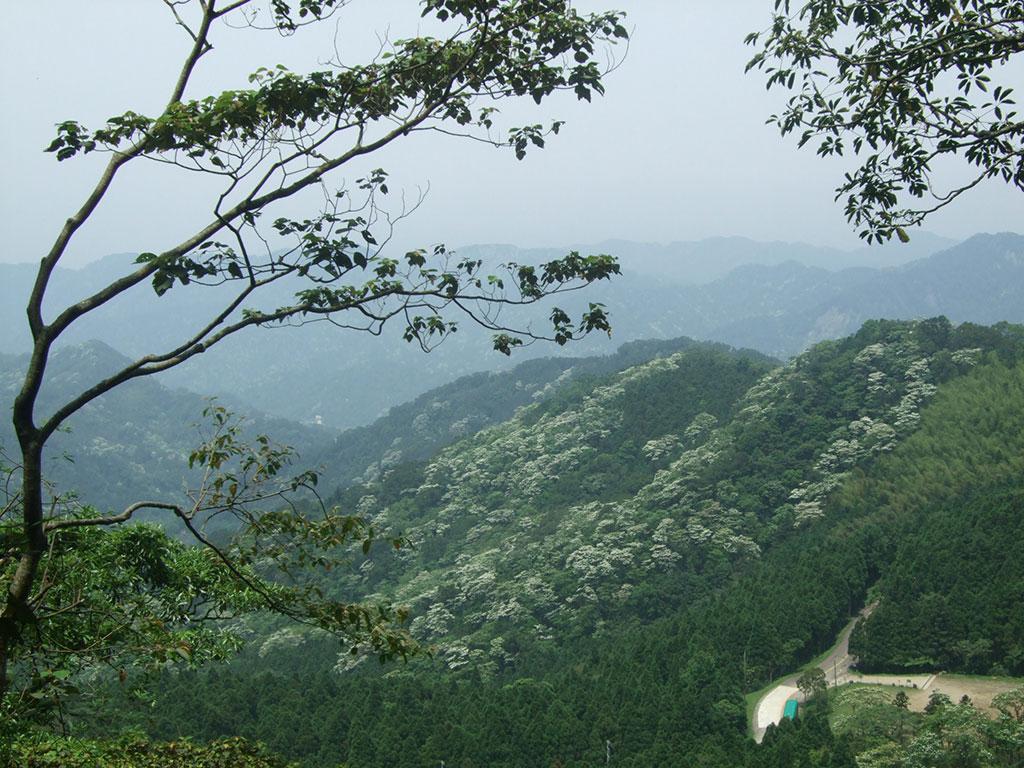 桐花盛開(馬武督探索森林提供)