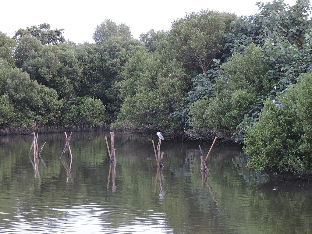 鳥柱提供生物停棲使用