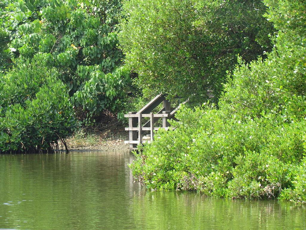 紅樹林及賞蟹區平台