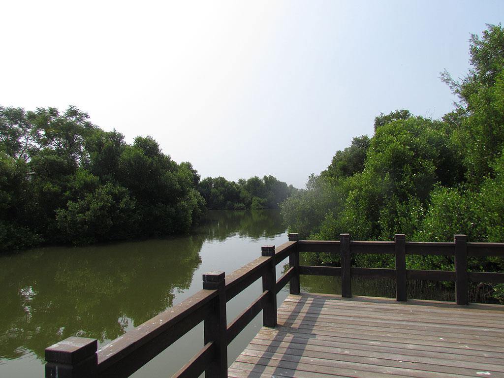 紅樹林展望平台