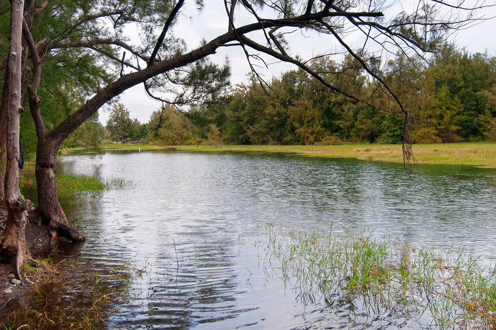 臺東森林公園湖景