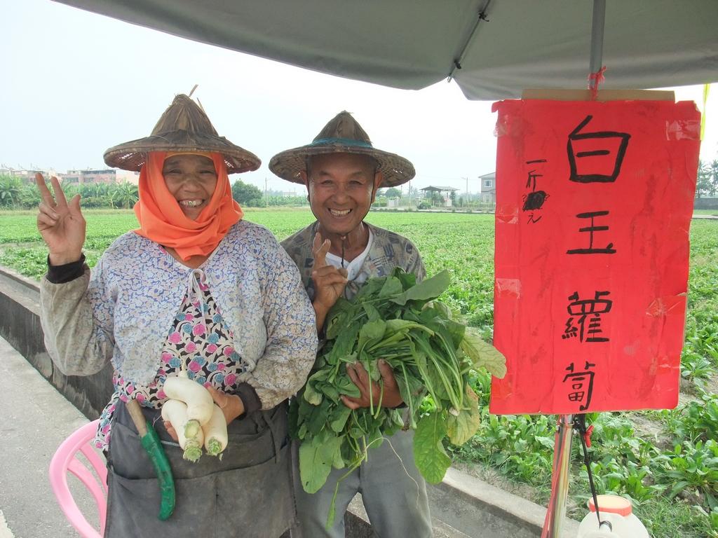美濃特有的白玉蘿蔔收成了,客家伯母與伯父開心的邀大家一起來拔蘿蔔。
