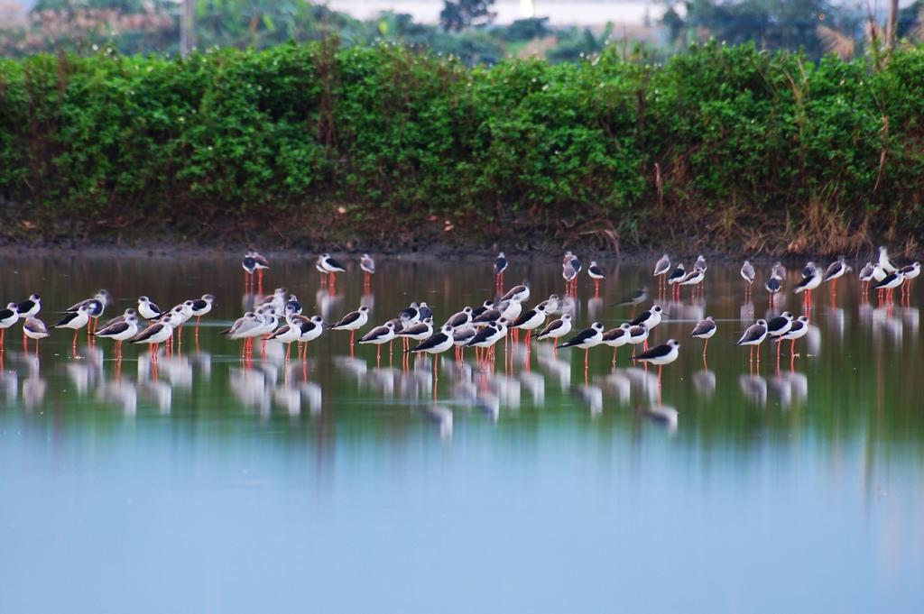 【時潮水鳥保護區】生物資源豐富,原始自然、植被完整,吸引無數候鳥來此休憩,具生態教育功能之賞鳥地點。