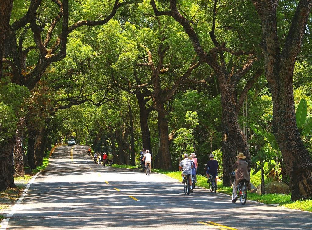【集集綠色隧道】魅力走廊-綠色隧道全長4.5公里,陽光黃金點點、灑照樹梢,一千株百歲老樟樹守候路旁,為來往遊人遮陽避暑,提供最美、最具魅力的悠閒綠廊