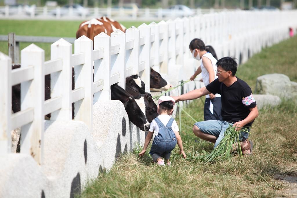 【瑞穗牧場】  位於泛舟中心後方,佔地近十公頃,飼養百餘頭荷蘭種乳牛,餵食物料以天然的牧草為主,榮獲「花蓮縣無毒農業」標章的酪農業。