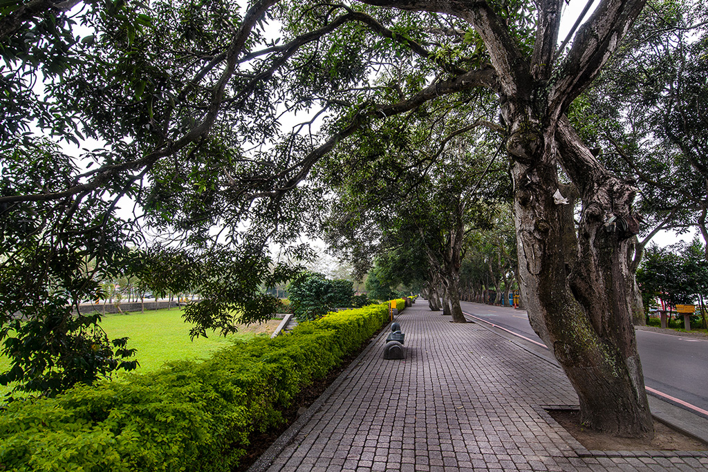 Green Tunnel Park is surrounded by 50-year-old mango trees