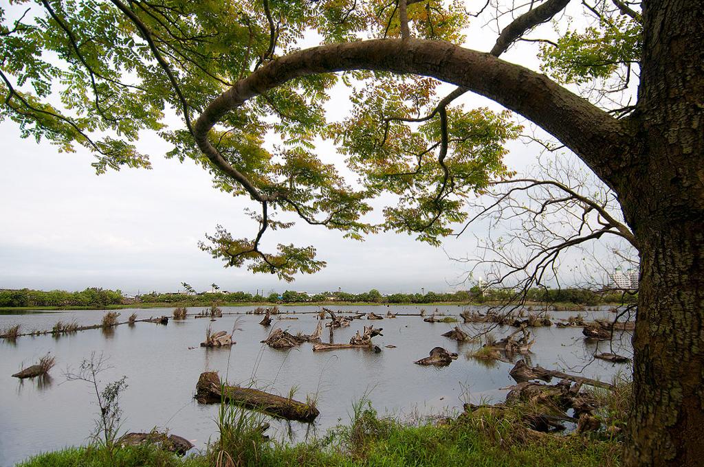 羅東林業文化區貯木池