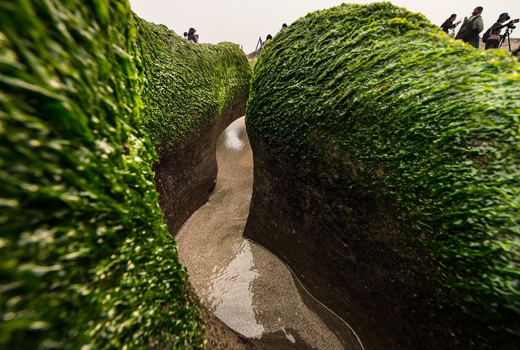 老梅綠石槽是由大片的綠色海藻覆蓋而成