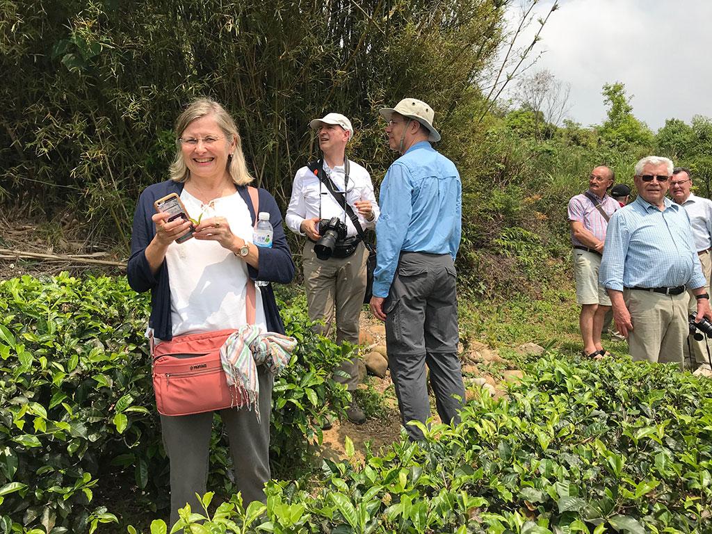 國外遊客走訪茶園(福源老茶廠提供)