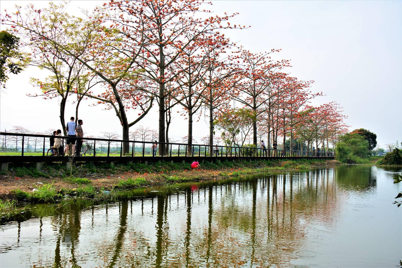 木棉花道旁步道