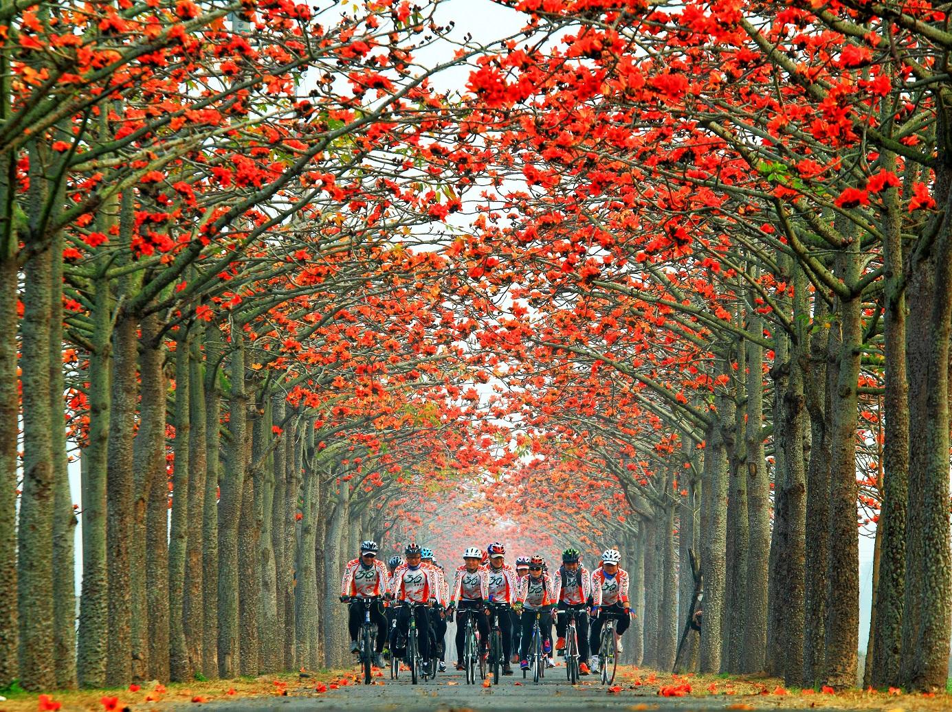 木棉花道騎乘自行車