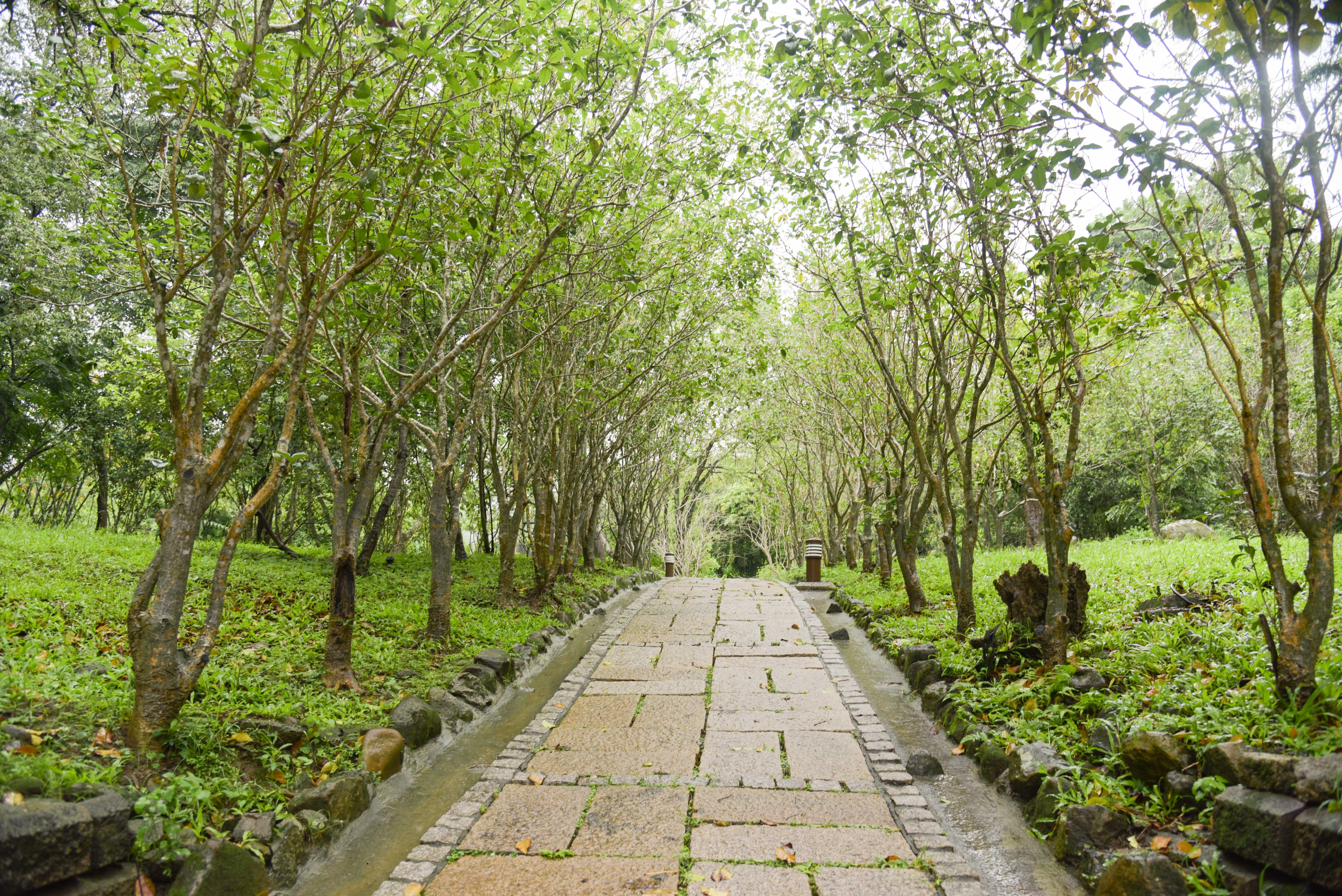 Osmanthus Path