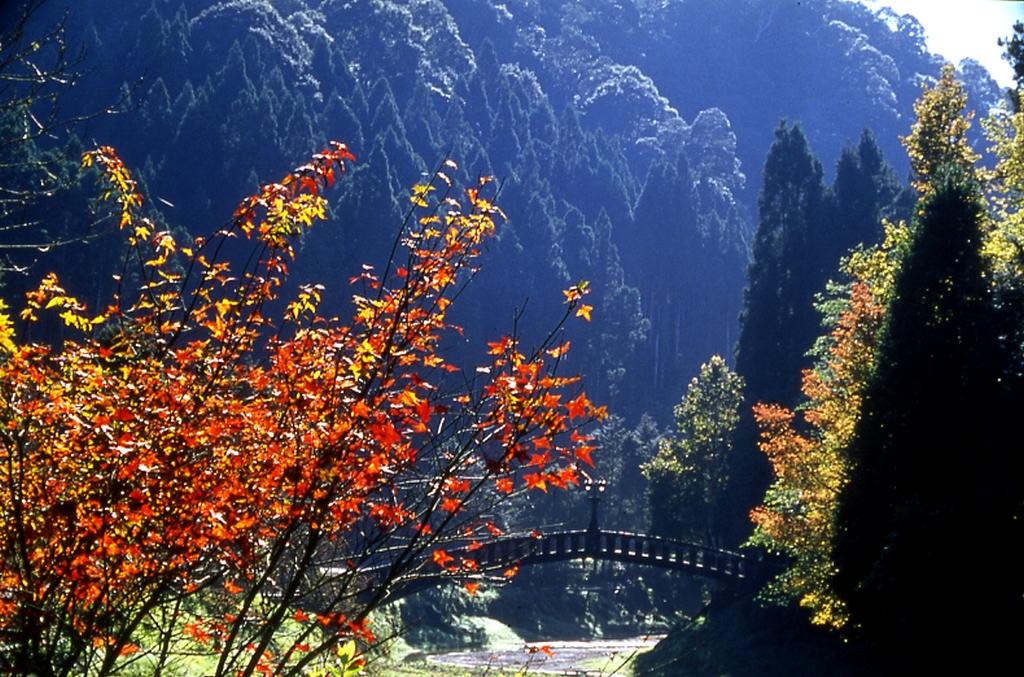 杉林溪森林遊樂區楓紅