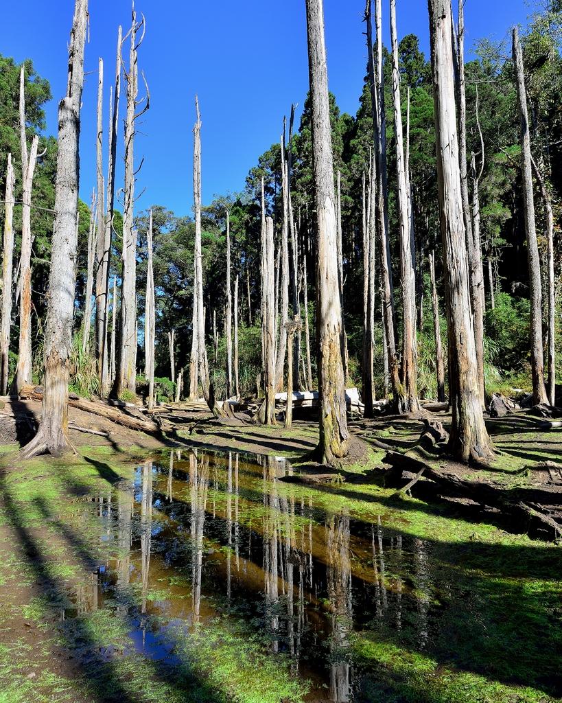 Sun Link Sea Forest Recreation Area