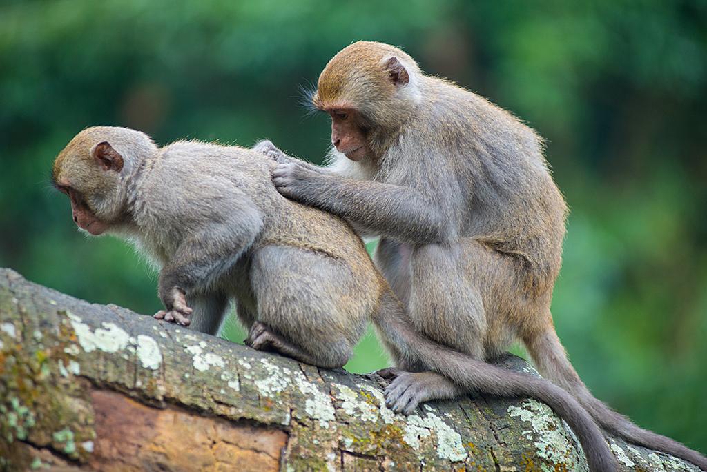 Wanpi World Safari Zoo