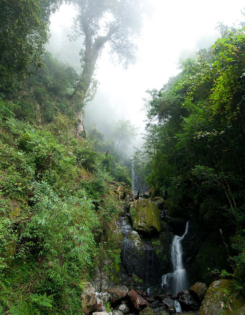 大雪山國家森林遊樂區-瀑布