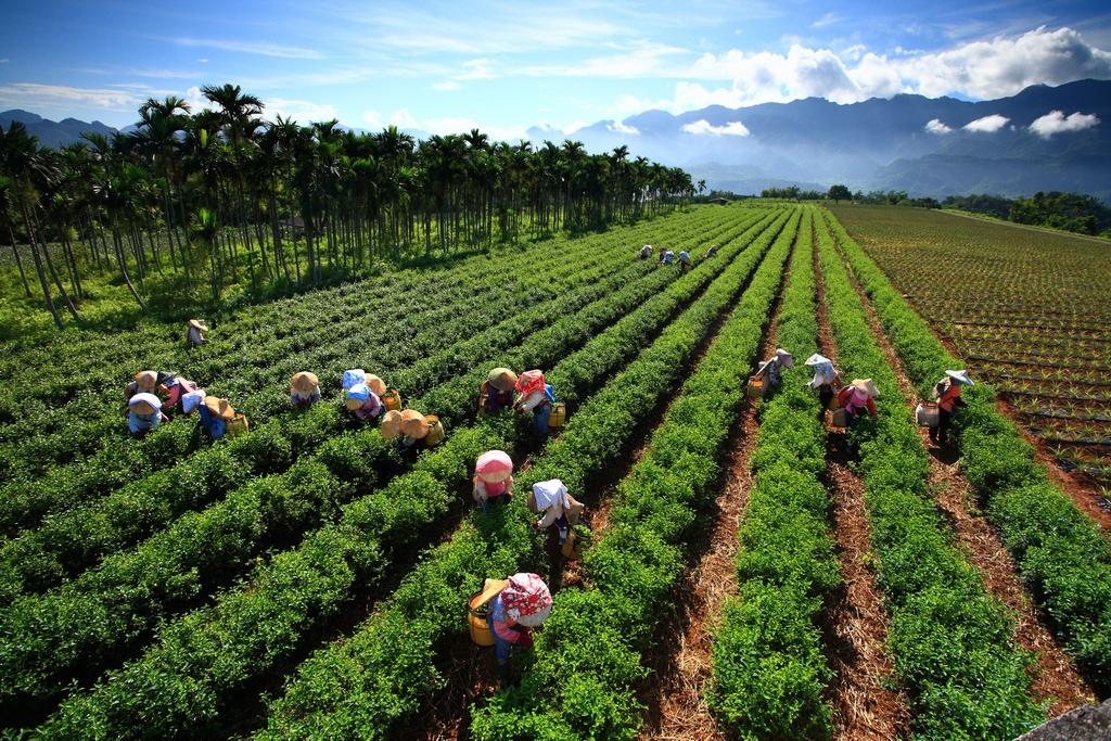 Wuhe Tourist Tea Plantations