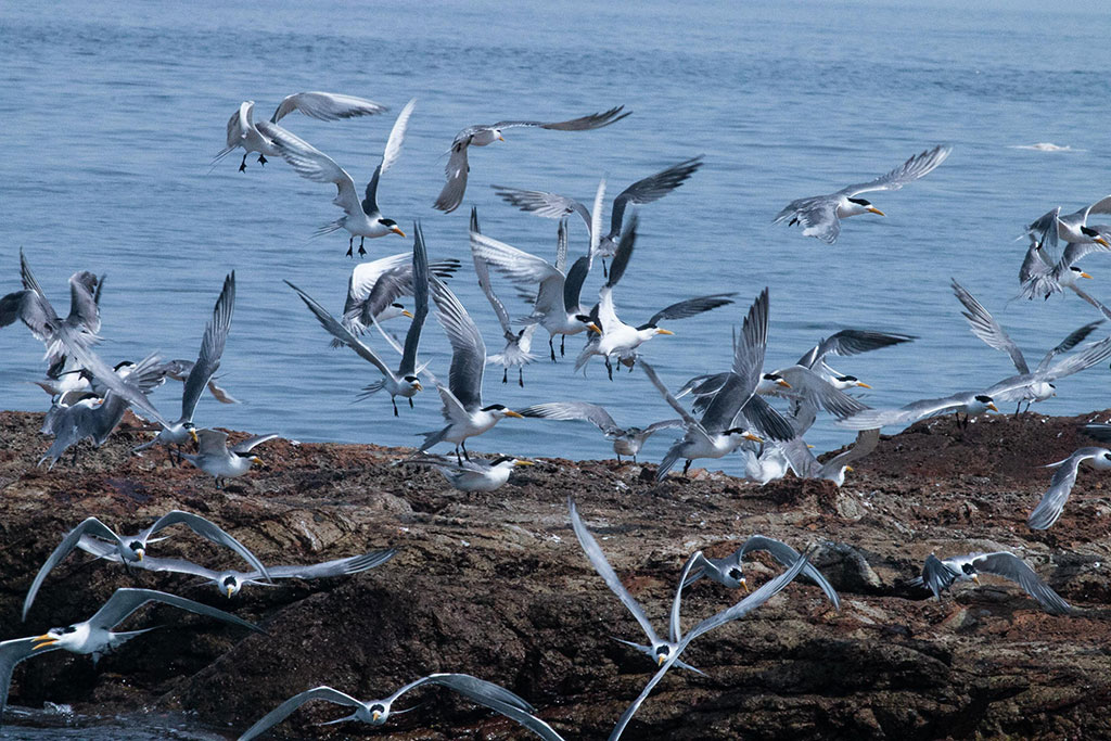 2020生態賞鷗暨海上看馬祖