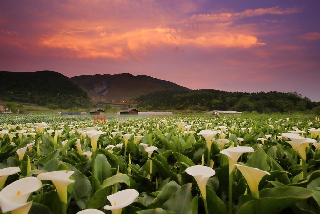 陽明山竹子湖頂湖黃昏