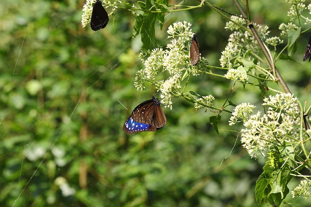 2020雙年賞蝶