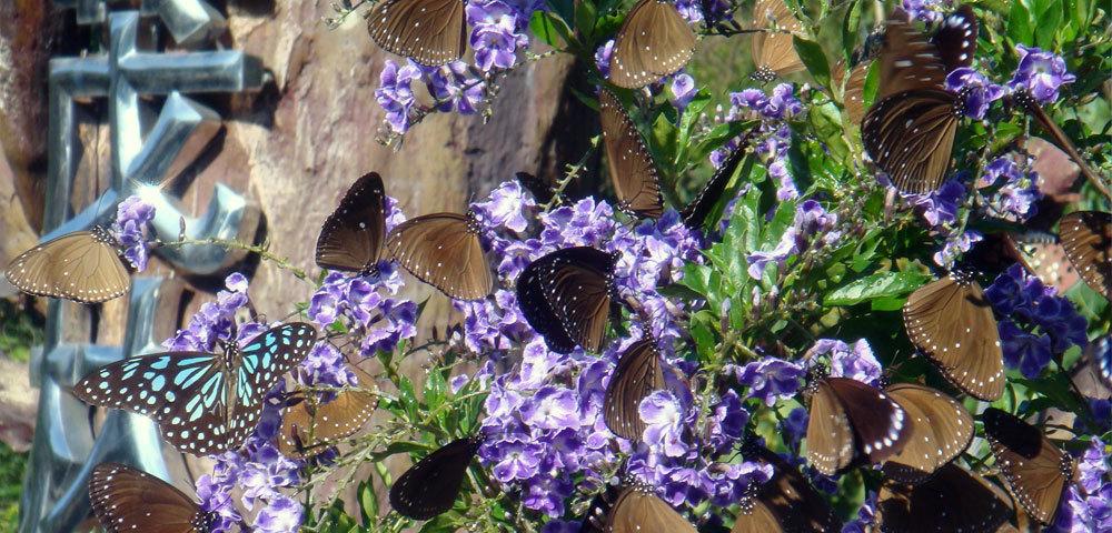 花與紫斑蝶