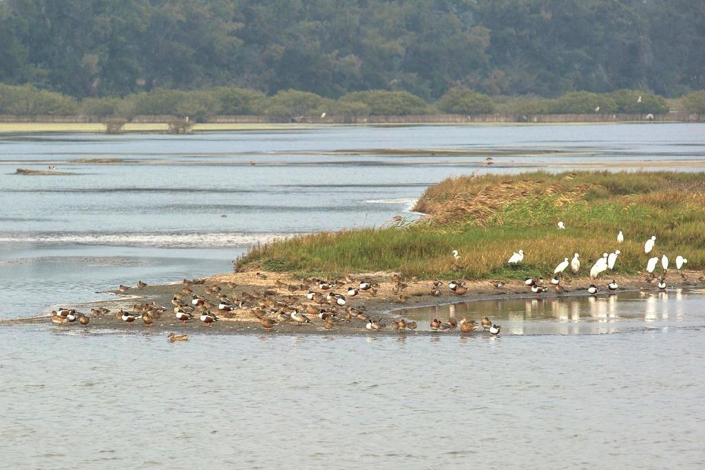 雲嘉南濱海國家風景區管理處提供