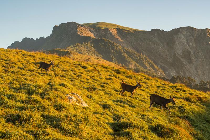 光頭山與水鹿