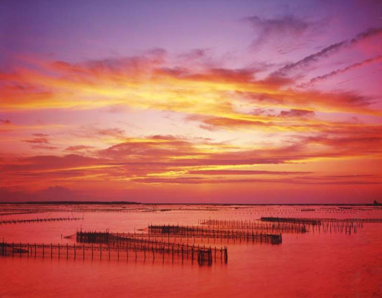 台南-網罟之美
