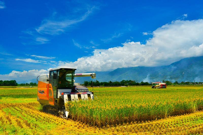 池上稻鄉豐收季