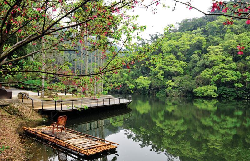 湖邊與櫻花