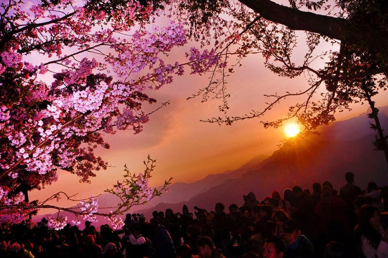 阿里山的日出