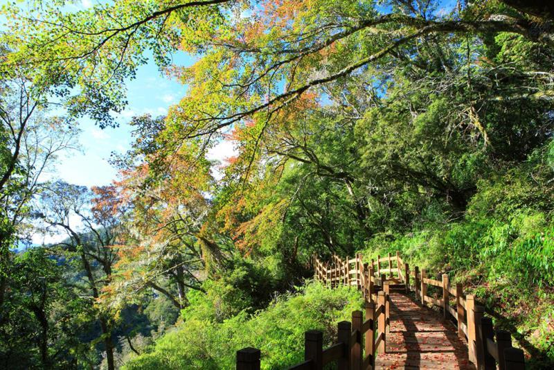 向陽森林遊樂區